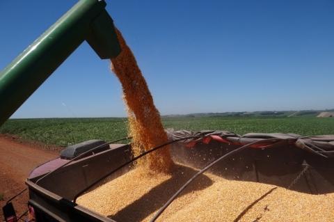 Colheita de grãos de verão já está quase terminada