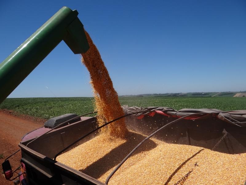 Na cultura da soja, restam por colher apenas 10% das áreas cultivadas no Rio Grande do Sul, diz a Emater