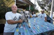 Projeto constrói lares para animais de rua e luta contra o abandono