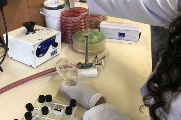 Diagnóstico microbiológico rápido ajudaria a combater resistência