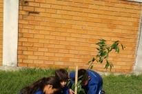 Programa que alia nascimentos ao plantio de árvores resulta em 11 mil mudas nas ruas
