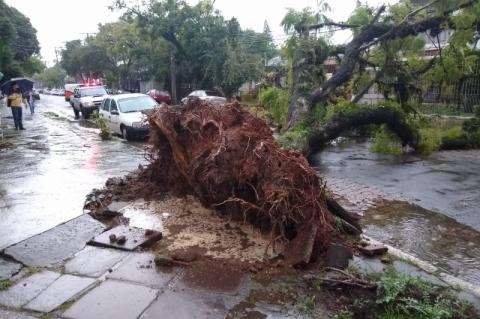 Chuva incessante causa transtornos no trânsito e queda de árvores em Porto Alegre