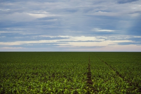 Marco regulatório para agrotóxicos é publicado no Diário Oficial da União
