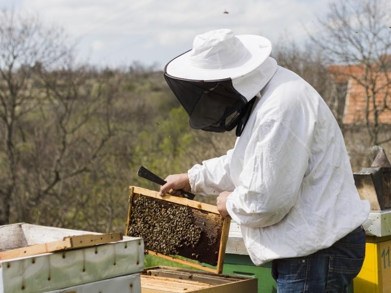 Empresas & Negócios - abelhas, apicultura 2 - divulgação freepik.com
