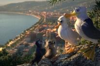 Animação alemã traz andorinha que acreditava ser gaivota
