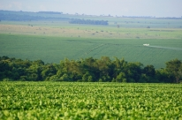 Em 11 anos, cresce 20% declaração de uso de agrotóxicos no Brasil