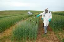 Agrotóxico proibido é encontrado em trigo de silo gaúcho