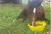 Campanha busca recursos para dar nova chance a animais com necessidades especiais