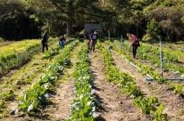 Escola de iniciação agrícola começa atividades na zona rural