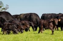 Pecuária brasileira avançou com melhorias na genética e no manejo