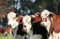 Carne gaúcha é referência em todo o País