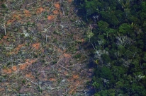 Fundos que administram R$ 65 trilhões pedem ao Brasil que proteja Amazônia