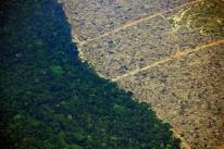 Bolsonaro usa redes sociais para destacar ações pelo meio ambiente