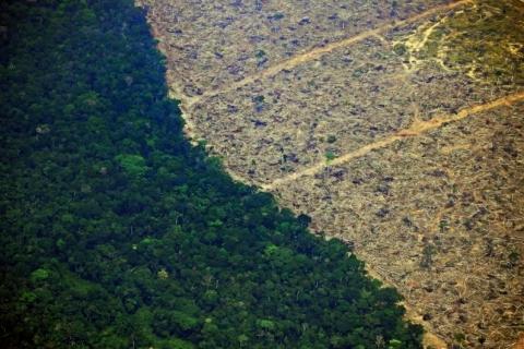 Pandemia derruba emissões de carbono, mas Brasil deve ter alta com desmate