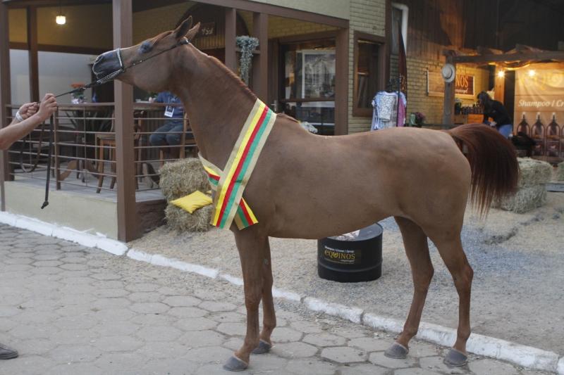 Égua Jarros Marytza é de propriedade de Delmar Jaime Jarros e Jenor Jarros