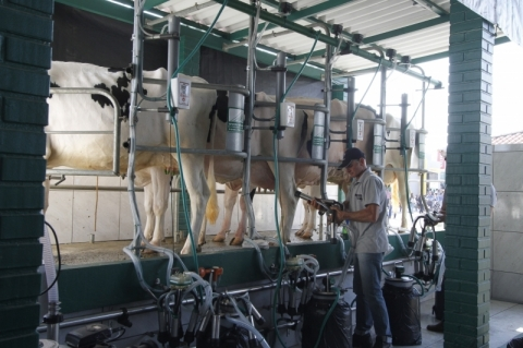 Portal trará dados sobre qualidade do leite no País