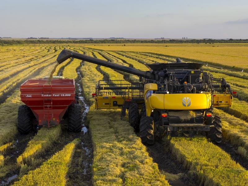 Na exportação, valorização do saco do cereal alcança R$ 100,00
