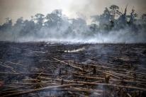 Desmatamento na Amazônia em agosto cresce 222% em relação ao mesmo mês de 2018