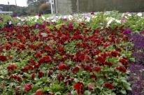Horto Municipal passará por ampliação com foco nas flores
