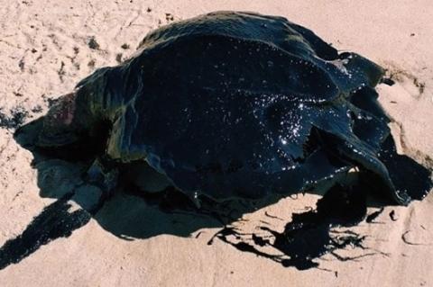 Bolsonaro pede investigação sobre manchas de óleo que atingiram o Nordeste