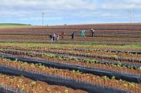 Vitivinicultura é penalizada com restrições do Ibravin