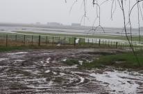 Produção de arroz deve ter queda no Estado
