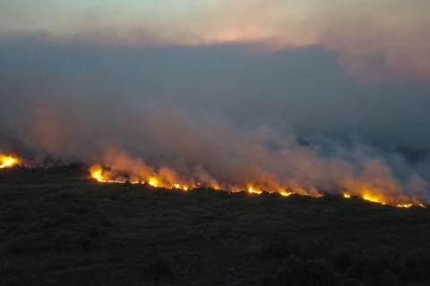 Pantanal tem recorde de queimadas em 22 anos no Mato Grosso do Sul