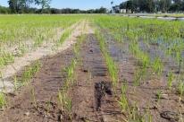 Irrigação vai ajudar agricultores em propriedades do Sul do Estado