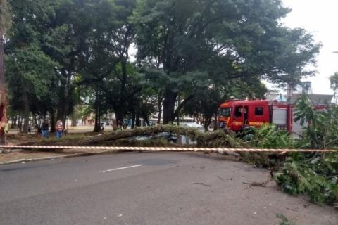 Queda de árvore gigante em praça de Porto Alegre afeta trânsito e corta energia