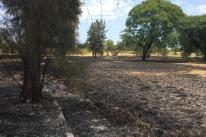 Incêndio queima um hectare do Parque Marinha do Brasil em Porto Alegre