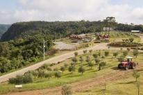 Pioneiro no Estado, parque oferece experiência com oliveiras