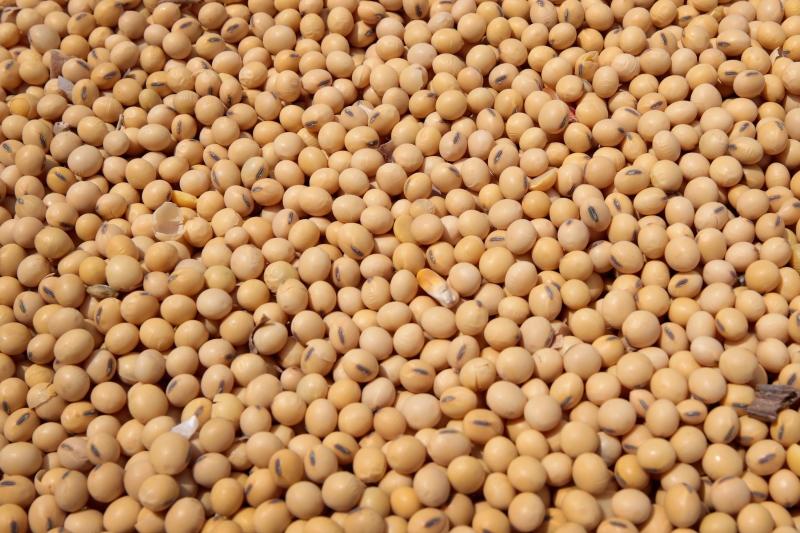 Escassez da matéria-prima principal, a soja, pode levar à prorrogação