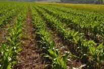 Custos de produção no campo registram alta de 2,57% no primeiro semestre do ano