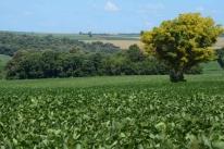 Mais de 2,5 milhões de proprietários de terra ainda precisam enviar a DITR 2020
