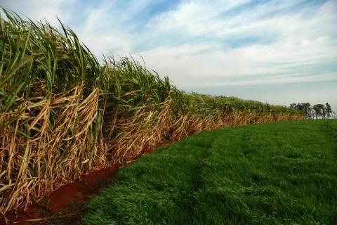 Uruguai quer diminuir entrada de brasileiros para colheita de cana-de-açúcar