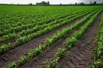 Tempo seco reduz ritmo de plantio das culturas de verão