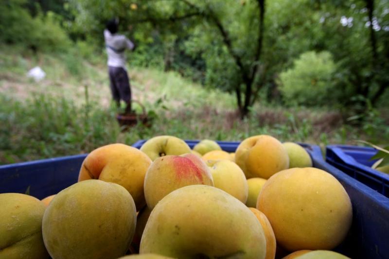 Em busca de melhor preço, parte dos agricultores vende direto para o consumidor