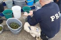PRF prende traficante de animais com quase dois mil filhotes de tartarugas