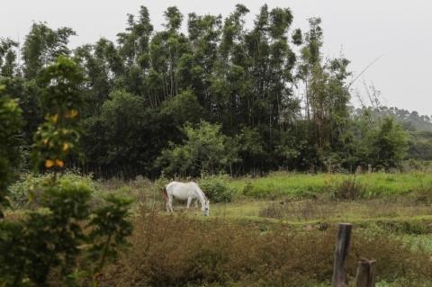 Zona Rural de Porto Alegre quer apoio para avançar