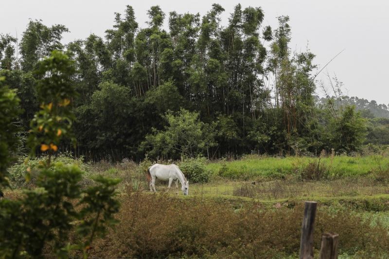 Produção agrícola é a principal atividade nos 4 mil hectares da área no Extremo Sul da Capital