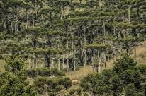 Bolsonaro dá ao ministério da Agricultura poder de conceder florestas públicas