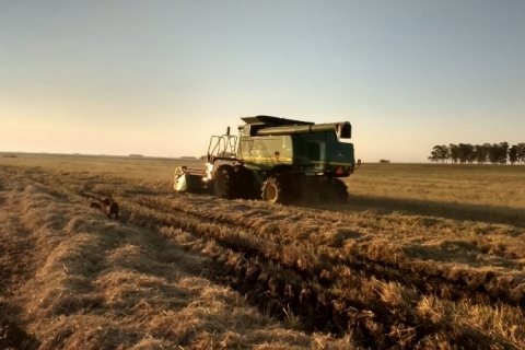 Exportação do agronegócio brasileiro cresce 5,9% nos primeiros 4 meses do ano