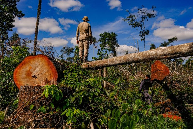 Entre os objetivos está a implementação de projetos e iniciativas para a tutela do meio ambiente natural da Amazônia Legal