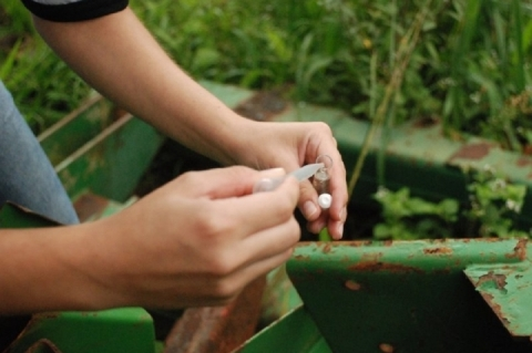 Santa Maria registrou 4.4 mil focos de mosquito da dengue no mês passado