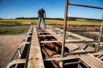 Fiscalização faz abordagens a caminhões com gado em Rosário do Sul