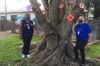 Iniciativa pendura livros infantis e para gestantes em árvore de Santa Cruz do Sul