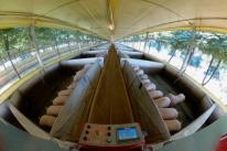 Música clássica é usada para a criação de suínos na Serra