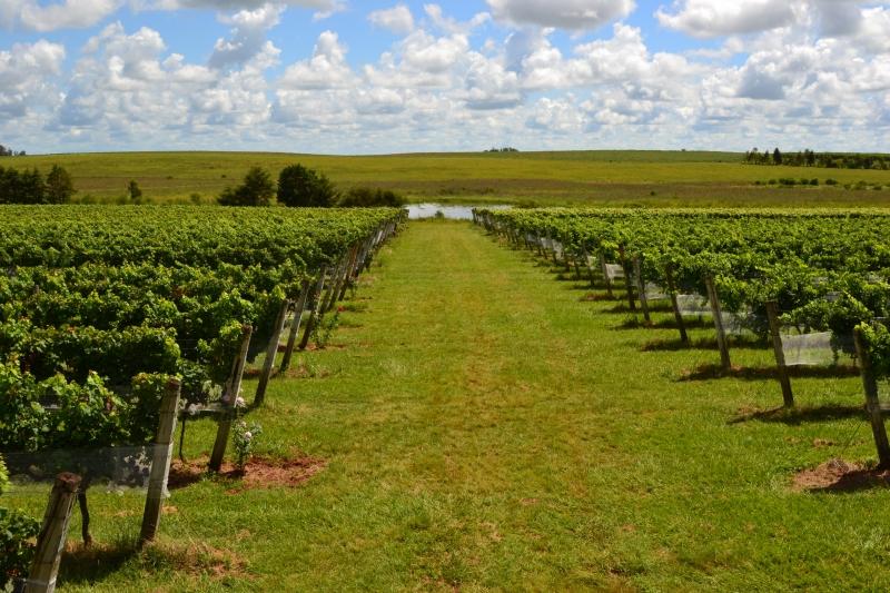 Intensa conexão do vinho com seu terroir e suas origens é uma das grandes forças do setor