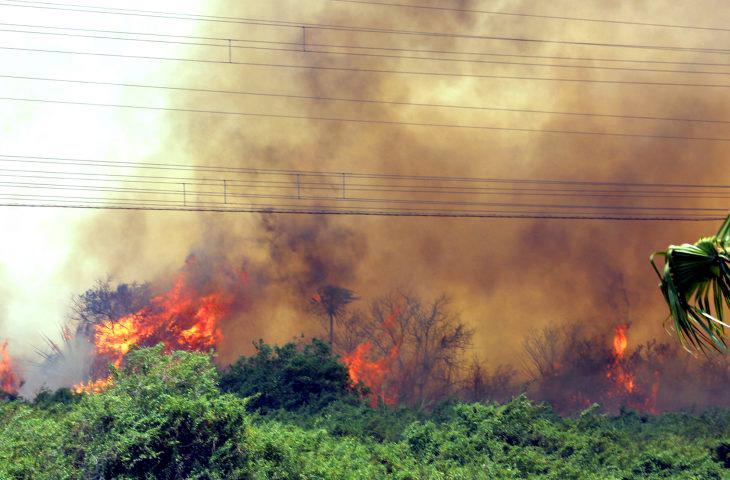 Entre janeiro e agosto, foram registrados pelos satélites do Inpe 10.153 focos de incêndio