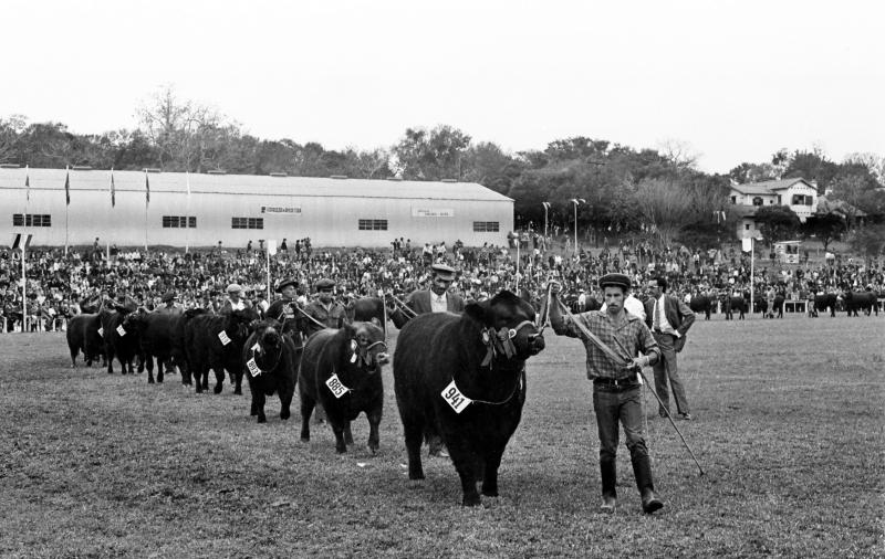 A 1ª Expointer foi realizada em 1972 no Parque de Exposições Assis Brasil, em Esteio